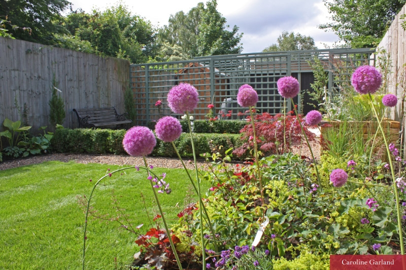 Allium giganteum photographed by Caroline Garland