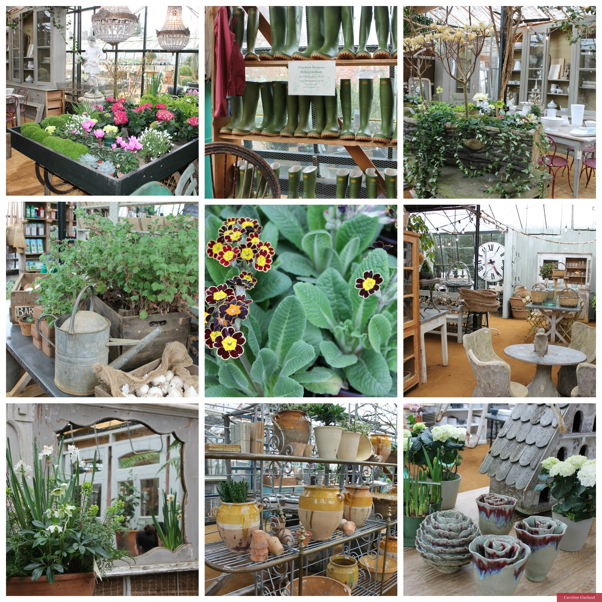 A visit to Petersham Nurseries