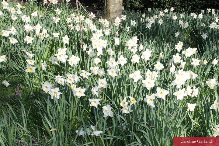 Spring definitely here in Battersea Park