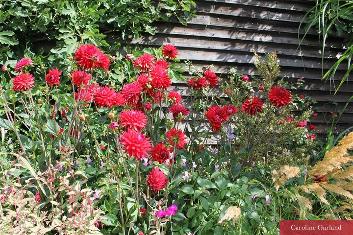Red dahlias at Great Dixter.  Very New Vintage