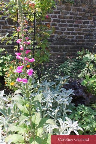 The kitchen garden wall