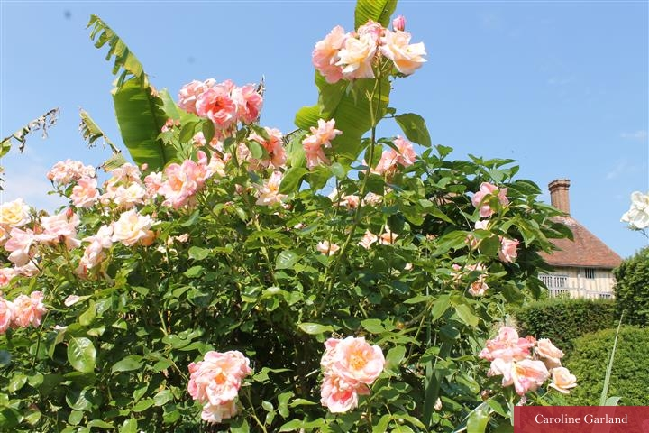 A climbing rose brings reliable beauty to your borders