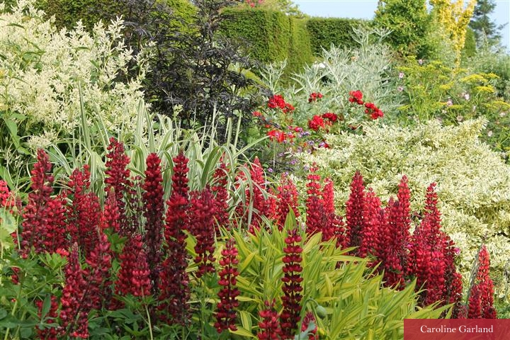 Vibrancy of colour, shape and variety.. shrubs and perennials brought together in a striking way