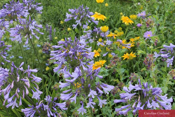 West Dean flowers July 2015