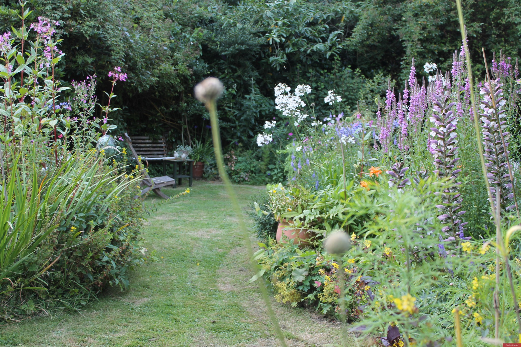 My favourite cottage garden