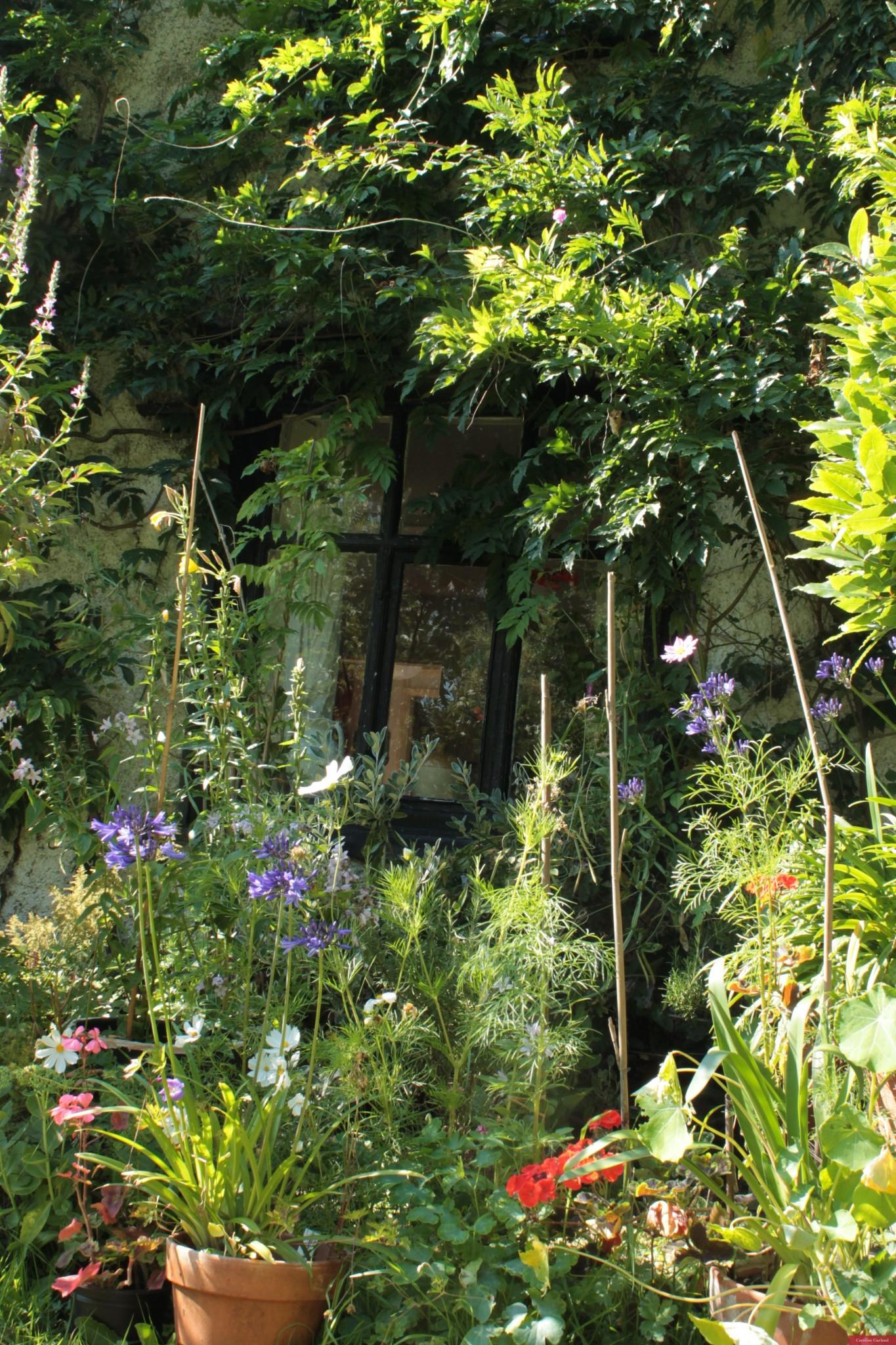 My favourite cottage garden