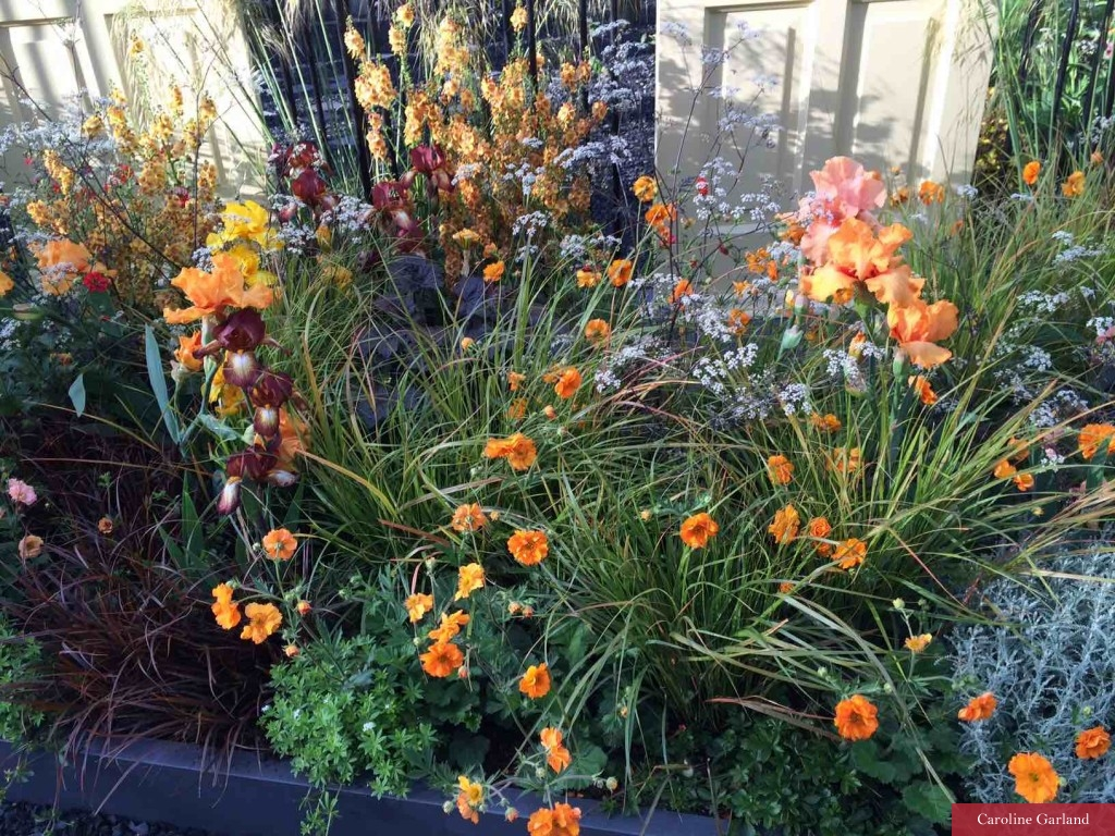 Orange flowers at Chelsea 2016