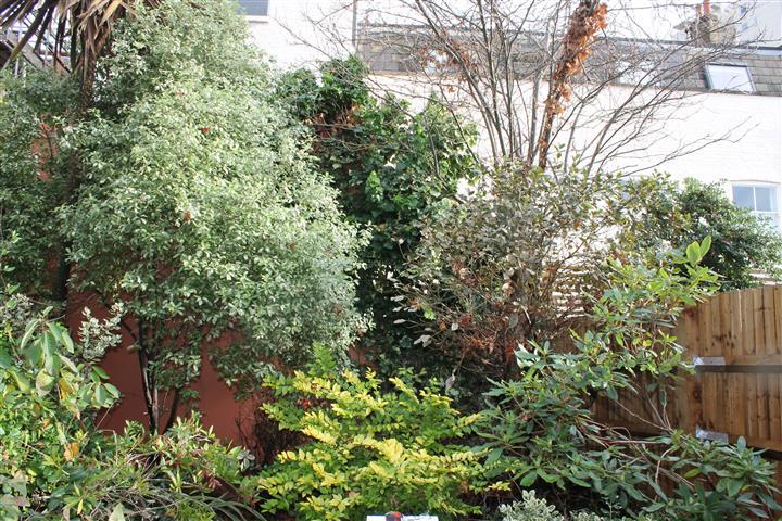 Fulham garden prior to redesign