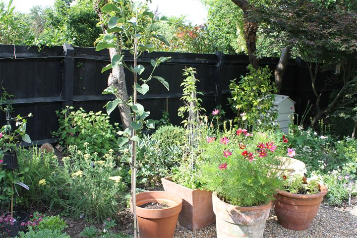 New lease of life to old fencing by painting it black